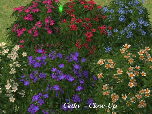 http://www.aussietopenders-sims2.com/images/Close%20Up%20Of%20Flowers.jpg
