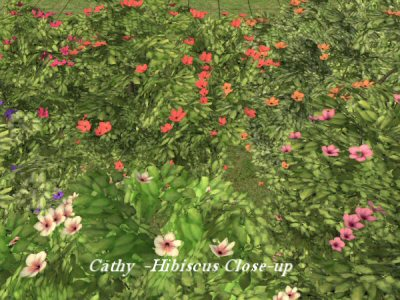 http://www.aussietopenders-sims2.com/images3/Cathy_Hibiscus.jpg